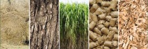 biomass-supply-chain-1